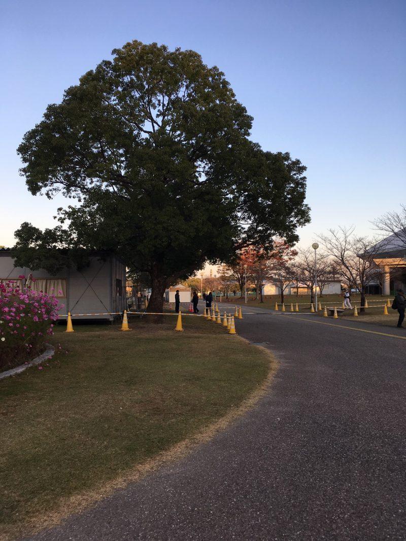 ソフトバンク秋季キャンプ 生目の杜運動公園