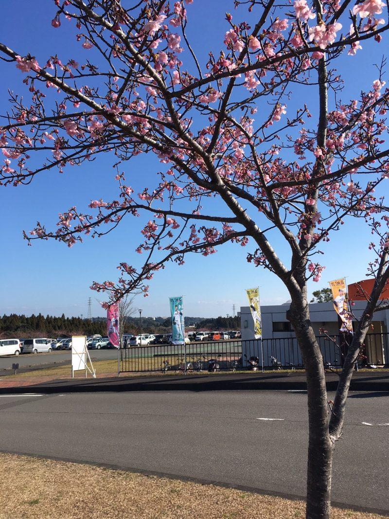 オリックスバファローズ宮崎春季キャンプの駐車場